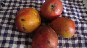 Willard Mangoes